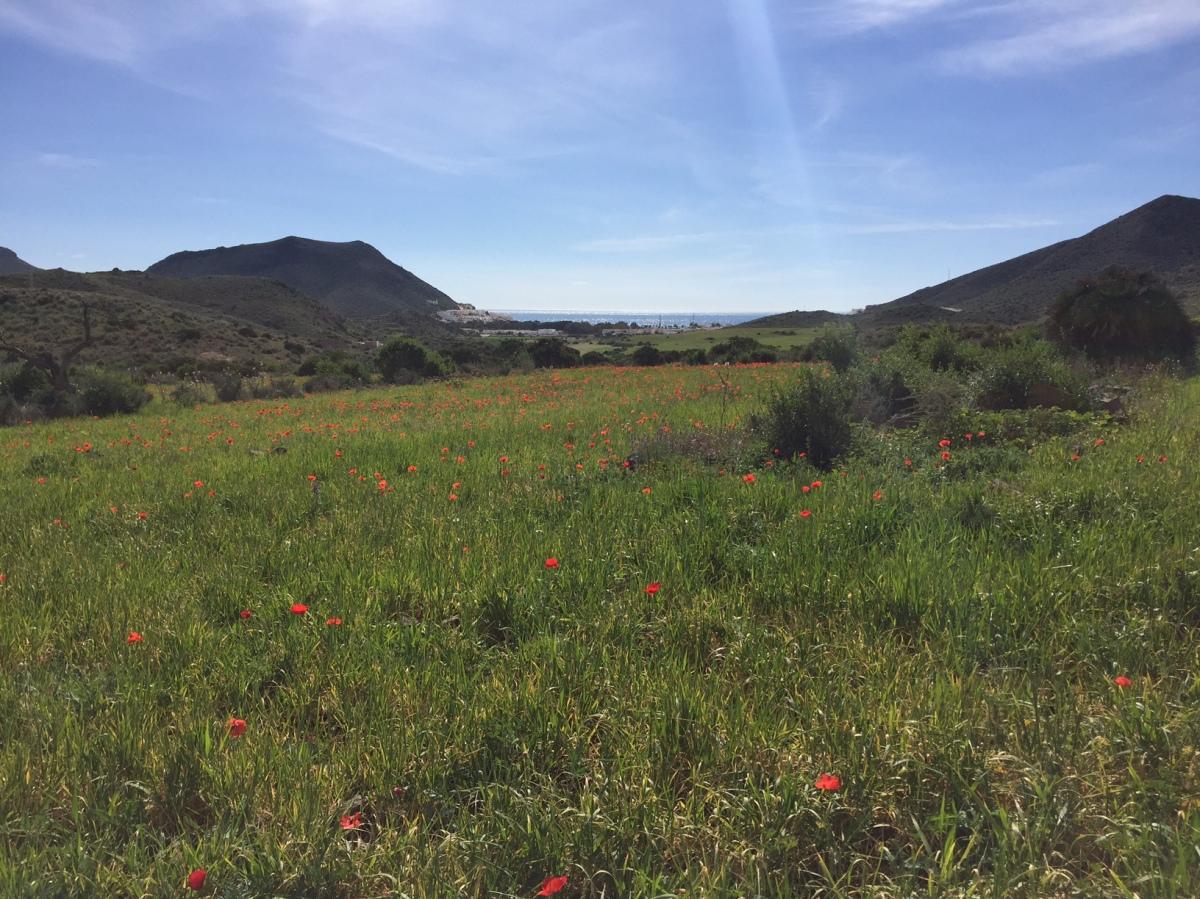 Ludotecas, campamentos y actividades con niños en junio y julio en Almería (2018)