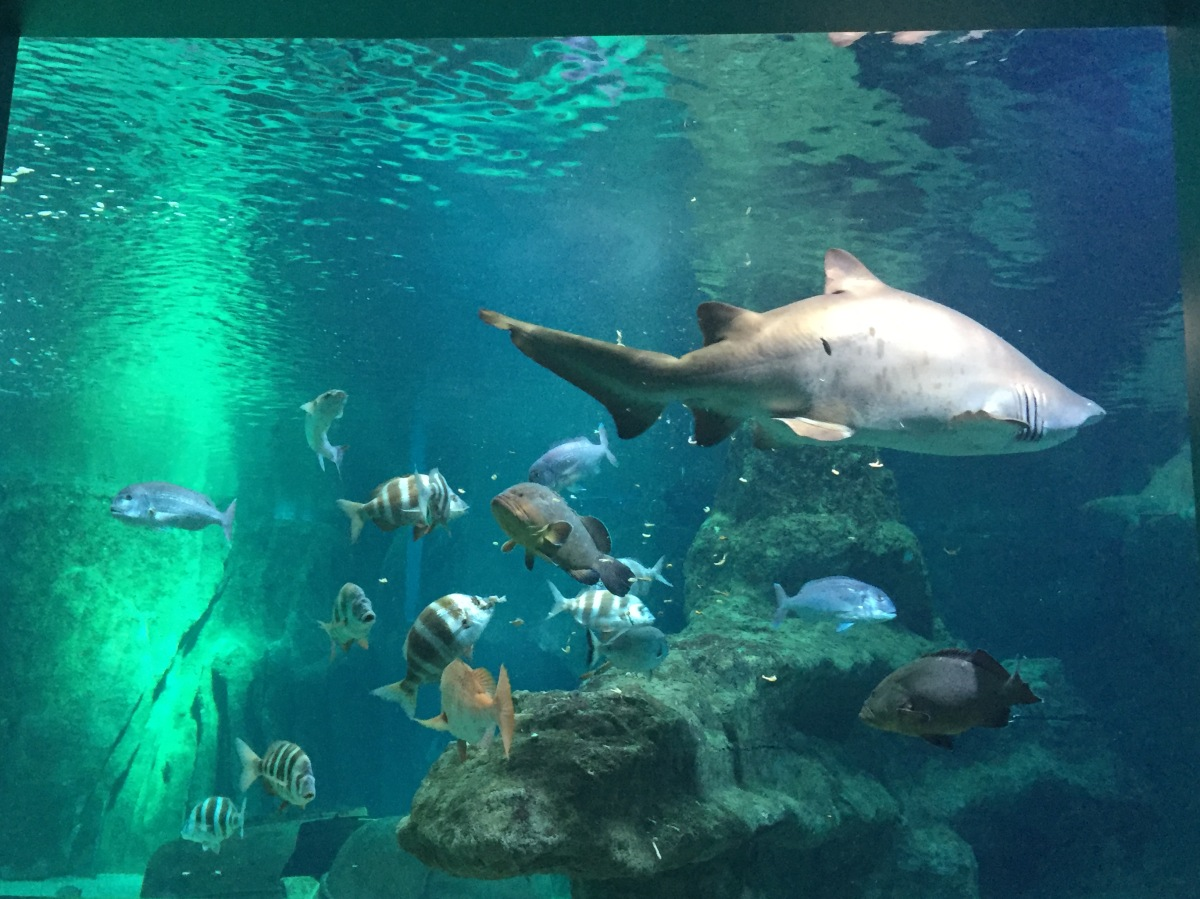Visita al Aquarium de Roquetas de Mar con niños