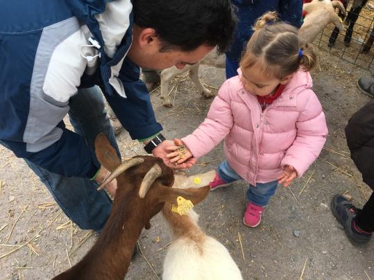 Alimentando a las cabrillas