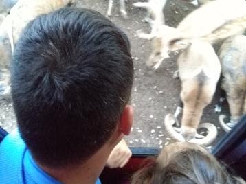 Animales en libertad en Collado del Almendral