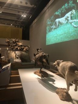 Expoción Animales en Movimiento