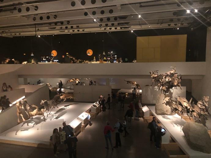 Visión del espacio Exposición WOW